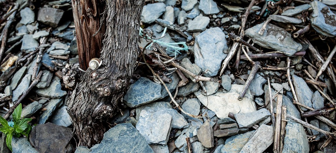 Blauer Devonschiefer