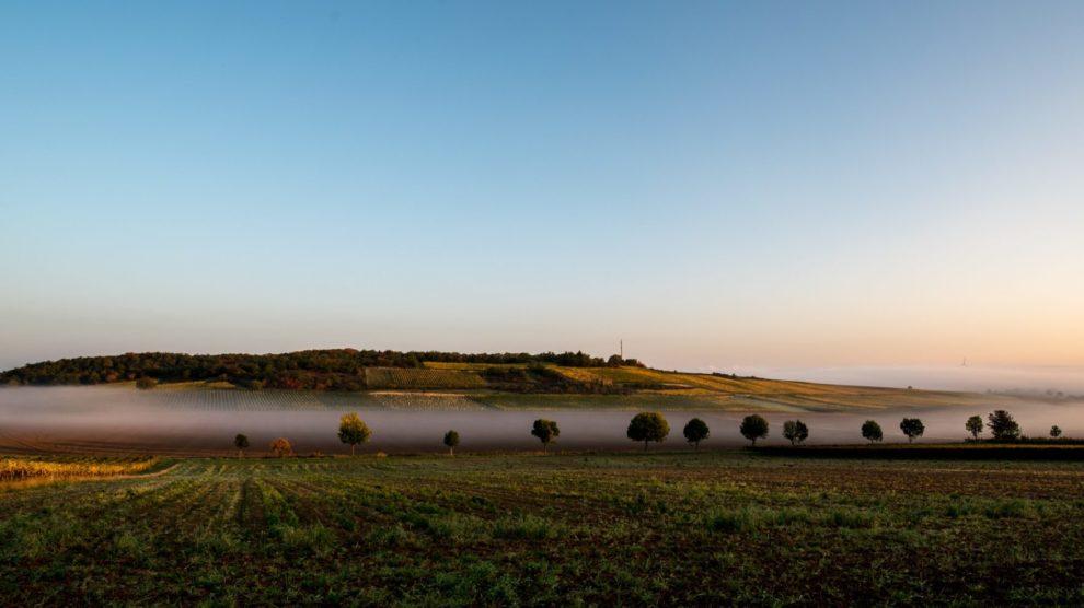 Rheinhessen GG 2018: meisterhafte Weine, Winzer mit sicherer Hand