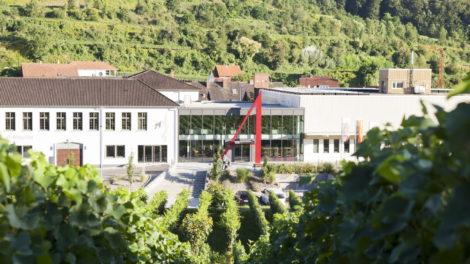 Winzergenossenschaft Achkarren: Burgunder aus besten Lagen am Kaiserstuhl